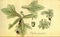 Anglų lietuvių žodynas. Žodis ceratopteris reiškia <li>ceratopteris</li> lietuviškai.