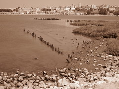 Sepia river