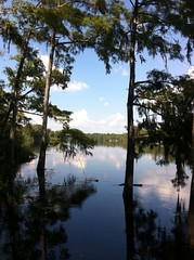 Suwannee River (Ed Hagelstein) Tags: trees water river high flood florida cypress suwannee dixiecounty