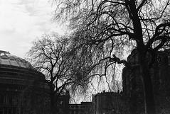 Hyde Park (Ian Atrus Gazzotti  iangazzotti.com) Tags: park blackandwhite bw london film analog 35mm nikon bn hyde londra biancoenero f70