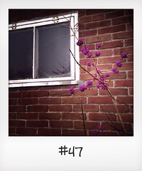 "#DailyPolaroid of 14-11-13 #47 • <a style=""font-size:0.8em;"" href=""http://www.flickr.com/photos/47939785@N05/11028023083/"" target=""_blank"">View on Flickr</a>"