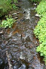 fall-yellow (amandabyrdseye) Tags: nature water forest michigan upperpeninsula freshwater puremichigan watertravels