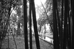 Scan-131230-0056.jpg (mathendrix) Tags: africa analog garden blackwhite marrakech roll2 nikonf3 marroco fujineopan400 yvessaintlaurent jardinmajorelle homedeveloping 2013 nikoncoolscan5000ed