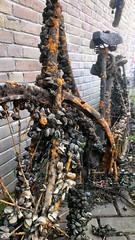 Zeg ken jij de mosselfiets? (@WorkCycles) Tags: amsterdam bike canal rust mussels fiets gracht mossel mosselen omafiets fietswrak mosselman mosselfiets