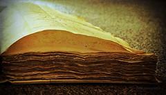 whispering voices (kelsk) Tags: old netherlands for with mygearandme mygearandmepremium kelskphotography atticofthecityarchivesofdelft cityarchivesofdelft notariëleakteboek klaarvoortranscriptie boekboekready transcriptionbook notorial documentsdelftzuidhollandhollandnederlandthe