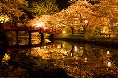sakura reflection again (gemapozo) Tags: park bridge japan night cherry pentax blossom aomori 日本 sakura hirosaki fosse k3 夜桜 さくら hirosakipark 青森県 弘前公園 弘前市 smcpfa31mmf18 hirosakijo 鷹丘橋 takaokahashi