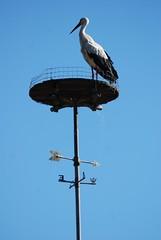 140504_95_Racconigi_Centro_Cicogne (mastino70) Tags: italy nikon italia nest piemonte ag nido cuneo piedmont stork racconigi 2014 cicogne d80 rosadeiventi centrocicogneeanatidi