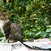 Cat in the shade of trees and the papers