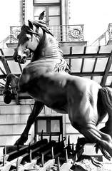 Orsay (Leonce Markus) Tags: blackandwhite horse white black museum cheval noir noiretblanc muse blanc orsay musedorsay orsaymuseum blackandwhiteonly