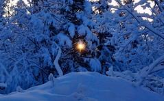 Morning star - (Explored) (JLS Photography - Alaska) Tags: trees winter sun sunlight snow alaska landscape star morninglight flare spruce blackspruce alaskalandscape jlsphotographyalaska