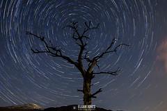 Tree Star-trial (elganjones1) Tags: wales canon stars star jones nightscape north astrophotography trials dinas llyn 14mm samyang 550d elgan