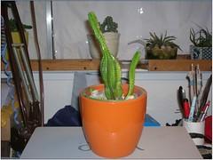 Cactus-Tillandsia-6a (cuirung) Tags: jade gollum haworthia airplant crassula felina faucaria perforata tigerjaw cactustillandsia bulbbolsa