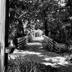 Ricoh Silver Springs FL a3-1 (John von Friedhof) Tags: park film water mediumformat unitedstates florida springs northamerica rainbowsprings ricohmatic225