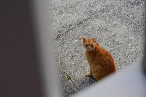 Hello Orange My Old Friend