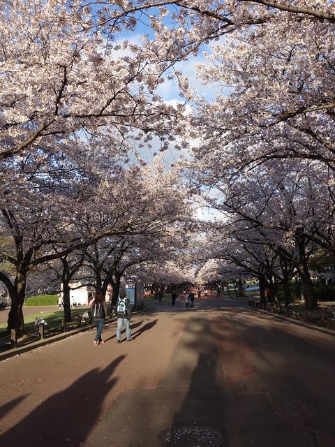 201404 日本關西賞櫻