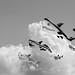 Rencontres interantionales des cerfs-volants