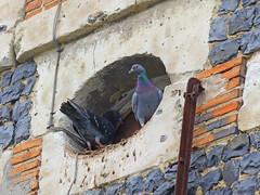 Nous sommes surveills... (Portocan) Tags: honfleur paysdauge calvados pommiers basilique colombages lisieux pontlvque pontdenormandie