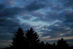 nightbird (mkk707) Tags: sunset clouds sony cosina sensor epsonrd1x icx413aq seikoepsonstyle