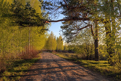 in the evening (Sergey S Ponomarev - very busy) Tags: road sunset primavera nature pine canon evening leaf spring woods shadows russia path branches north may natura greens birch trunks paysage hdr highdynamicrange paesaggio nord russie   kirov   russland          vyatka   70d     sergeyponomarev ef24105f40l viatka  wjatka