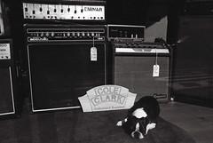 Cole Clark's Trusted Guardian (raindog_mk) Tags: blackandwhite bw film dogs 35mm collingwood melbourne nikonf2photomic pushprocessing delta400pro