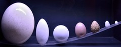 Eggs (siinestesiia) Tags: museum huevos eggs museo nomerompasloshuevos