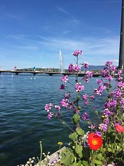 Geneva like a tourist (pinkcappuccino) Tags: fleurs genve jetdeau laclman