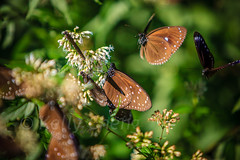 Taiwan-121113-263 (Kelly Cheng) Tags: travel color colour green tourism nature animals horizontal fauna butterfly daylight colorful asia day taiwan vivid nobody nopeople colourful traveldestinations  northeastasia