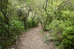 Trail through woods (kamirao) Tags: trees nature woods jungle islamabad margallas