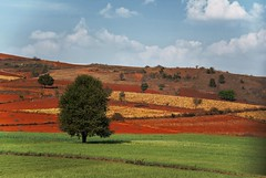 Linee e contrasti (Tati@) Tags: lines contrast countryside farming fields shanstate redland