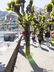 DSC_6624 (Roelofs fotografie) Tags: sky sun lake plant como alps color tree green nature water landscape lago cozy nikon meer groen outdoor air natuur boom alpen lucht zon italie wilfred gezellig landschap kleur 2016 menaggio d3200 roelofs