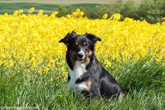 FAN_5293.jpg (Flemming Andersen) Tags: dogs water denmark seaside spring hund dk hurup nykbingmors northdenmarkregion