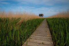 Lonely way! (jensrother) Tags: nl groningen niederlande drieborg