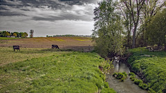 Prairie Creek (myoldpostcards) Tags: road usa reflection texture water field rural america creek season landscape illinois spring stream unitedstates cattle farm country il watts agriculture livestock grazing rd centralillinois prairiecreek sangamoncounty myoldpostcards vonliski