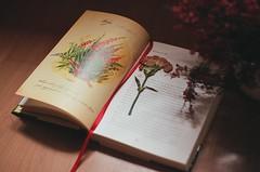 The Secret Garden (kwitnienie) Tags: flowers film childhood analog garden photography book secret magic analogue pentacon magical praktica kwiaty magia the kwiat ksika ogrd dziecistwo tajemniczy