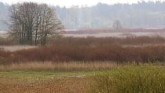 *** (pszcz9) Tags: tree nature landscape nationalpark spring sony poland polska wetlands shrub a77 wiosna przyroda drzewo beautifulearth krzew pejza parknarodowy mokrada