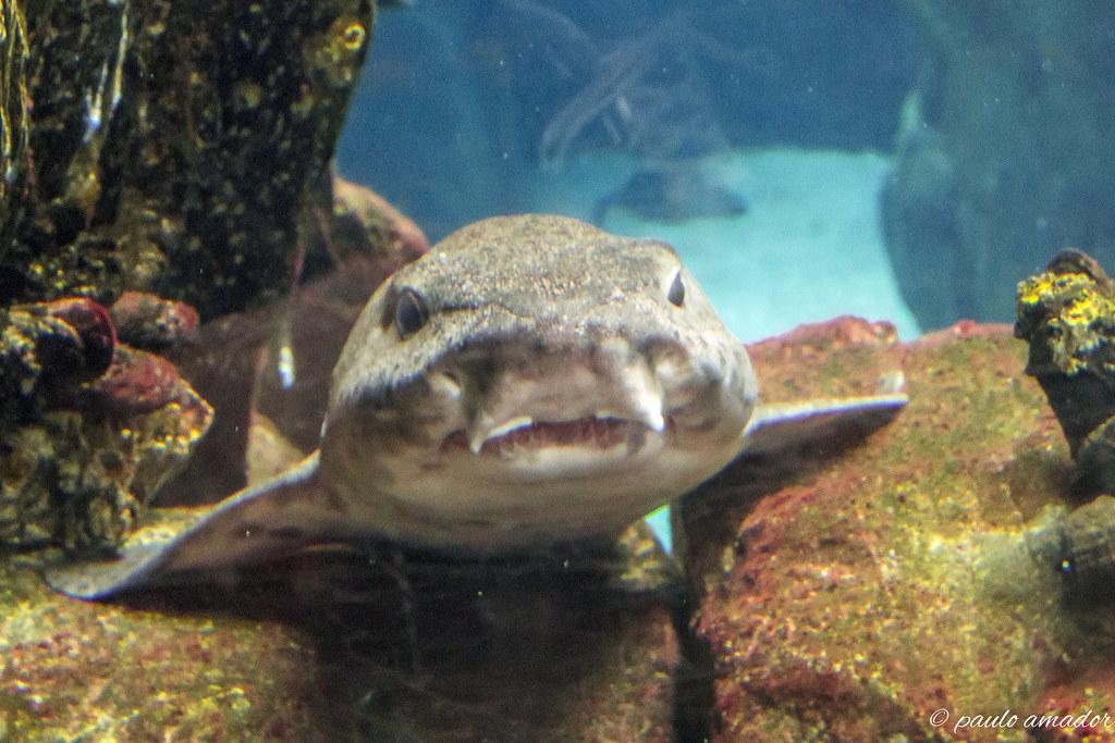 Swasser aquarium fische simple grne frbung nach zugabe for Goldfisch rassen