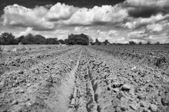 Depth of Field :) (Mister Oy) Tags: blackandwhite monochrome field rural walking outdoors mono farming depthoffield davegreen billinge oyphotos fuji18mmf2 18mmf2 fujixe2 oyphotos
