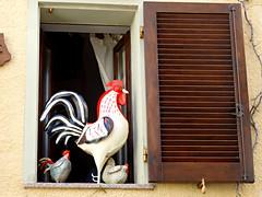 Funki gallo! (anton) Tags: finestra gallo galline castelsardo sardegna funkychicken window hen chicken