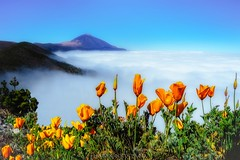 Beyond the clouds (Blai Figueras) Tags: flowers sky panorama mountains flores clouds landscape volcano flickr horizon atmosphere paisaje canarias cielo tenerife eden teide paraiso montaas flors