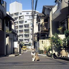 (  / Yorozuna) Tags: animal japan cat mammal tokyo alley alleyway  alleycat  straycat  higashishinjuku           shinjukuward   wakamatsukawada