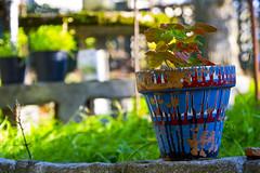 Maceta (kukolas) Tags: planta objeto maceta entorno