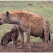 Mom hyena with her cubs .....