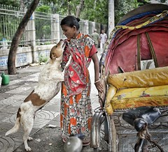IMG_20160613_000034 (auniket prantor) Tags: poverty road street dog color love animal fun women asia photographer with humanity indian south homeless poor happiness social enjoy take editorial dhaka care visual issue bangladesh journalist based subcontinent 2016