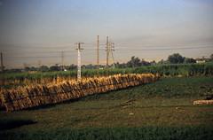 gypten 1999 (145) Busfahrt Assuan - Luxor (Rdiger Stehn) Tags: winter analog 35mm urlaub egypt slide dia 1999 scan afrika landschaft gypten 1990s canoneos500n nordafrika analogfilm kleinbild niltal canoscan8800f kbfilm 1990er obergypten sdgypten diapositivfilm aad