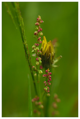 competition, cooperation... (e27182818284) Tags: flower grass blume schwarzwald blackforest smcpk55mmf18