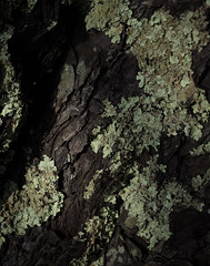 Summer in the woods 3 (S's images) Tags: tree trunk woodland summer lichen green brown abstract texture