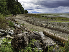 Love the shore (Tony Tomlin) Tags: ocean canada beach clouds britishcolumbia logs driftwood shore crescentbeach boundarybay crescentbeachbc