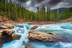 Sunwapta falls (Arnaud Bertrande | Photographe) Tags: 2015 canada sunwaptafalls jasper alberta paysage arnaudbertrande cascade sapins montagne