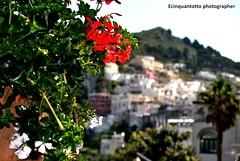Profumo (Ecinquantotto (+ 920.000 : Grazie..Thanks !)) Tags: italy colors capri nikon mediterraneo italia campania pov dream dreams colori parfum profumo d3000 nikond3000