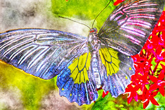 Watercolor Butterfly (LotusMoon Photography) Tags: painterly postprocessed art nature digital photomanipulation photoshop butterfly colorful bright artistic painted digitalpainting photoart impressionist paintograph annasheradon